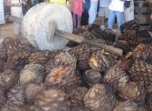 Mezcal (agave) for burning, 400