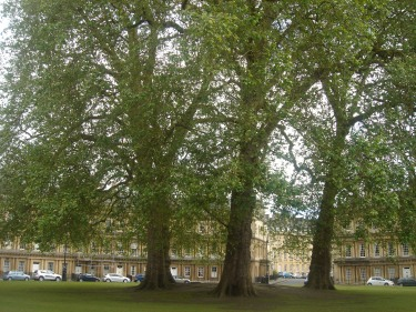 Trees in the Circus