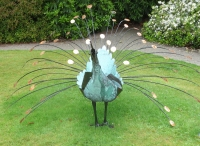 Peacock, Dot Kuzniar